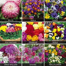 Winter Bedding Plants Bumper Collection