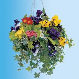 Hanging Basket Collection (Winter)