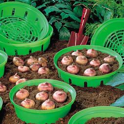 Bulb Baskets