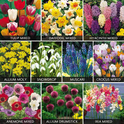 Value Spring Bulbs Collection