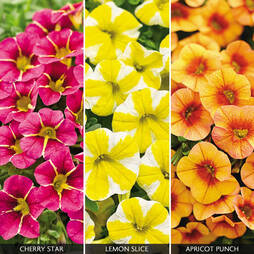 Calibrachoa 'Fruities Collection'