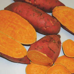 Sweet Potato 'Carolina Ruby'