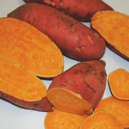 Sweet Potato 'Carolina Ruby'