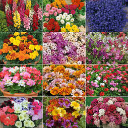 Annual Bedding Plants Collection