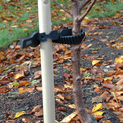 Tree Stake and Tie