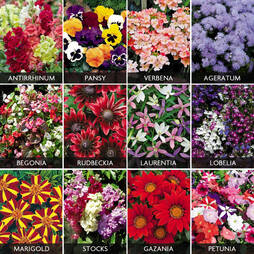 Summer Bedding Plants Pack