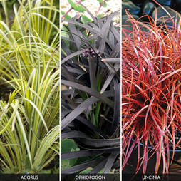 Grasses 'Gold, Black and Red Collection'