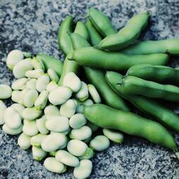 Broad Bean 'The Sutton' (Seeds)
