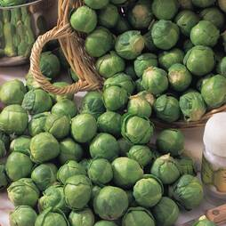 Brussels Sprout 'Bedford' (Seeds)