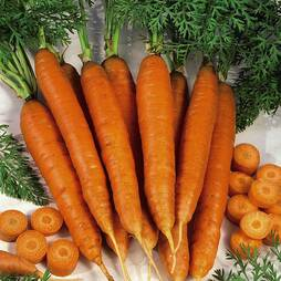 Carrot 'Autumn King 2' (Seeds)