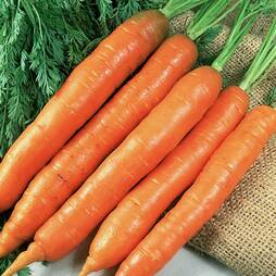Carrot 'Early Nantes 2' (Seeds)