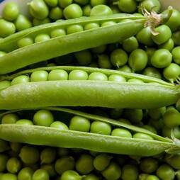 Pea 'Rondo' (Maincrop) (Seeds)