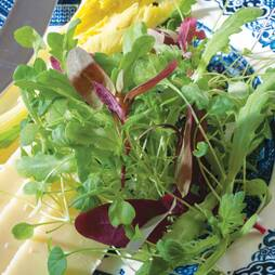Salad Leaves 'Express Mix' (Seeds)