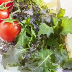 Salad Leaves 'Mediterranean Mix' (Seeds)