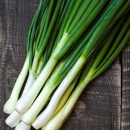 Spring Onion 'Winter Hardy' (Seeds)