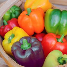 Sweet Pepper 'Mini Bell Mixed' (Seeds)