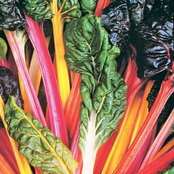 Swiss Chard 'Bright Lights' (Seeds)