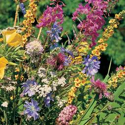 Wild Flower Mixture (Seeds)