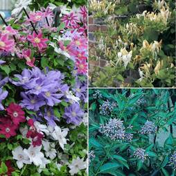 Nurserymans Choice Climber Collection