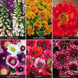 Perennials 'Express Collection' (Garden Ready)