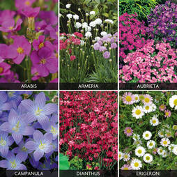 Perennials 'Carpet Collection' (Garden Ready)