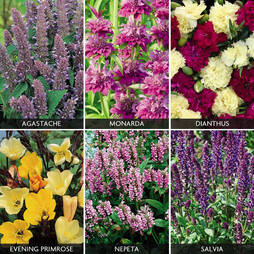 Perennials 'Perfumed Collection' (Garden ready)