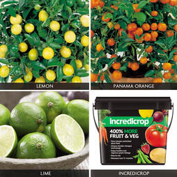 Citrus Tree 'Complete Collection'