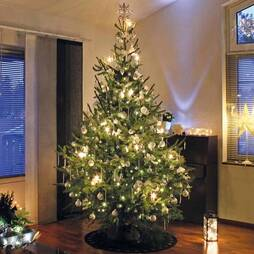 Nordman Fir Christmas Tree (4