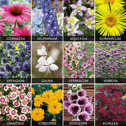 Spectacular Perennials Collection