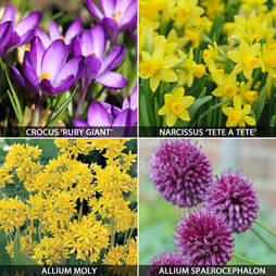 Spring Flowering Bulb Bonanza Collection