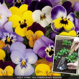 Viola 'Sorbet Mix' (Garden Ready)