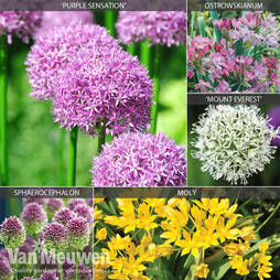 Allium 'Cottage Garden Collection'