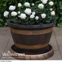 Wooden Barrel Effect Pot & Saucer