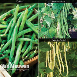 Climbing Bean Collection