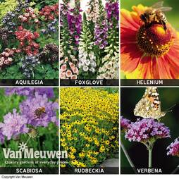 Best for Bees Perennial Collection
