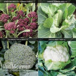 Brassica Summer Collection