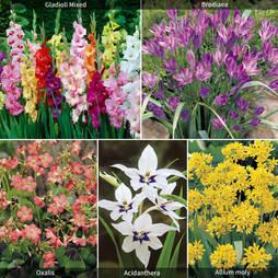 Summer Spectacular Colour Collection