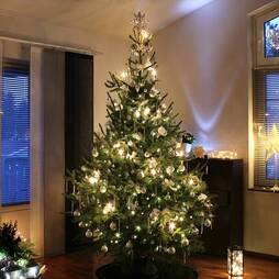 Nordmann Fir Christmas Tree (5ft)