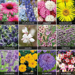 Hardy Perennials Collection