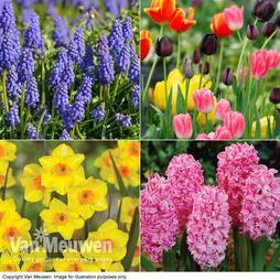 Easter Flower Bulbs
