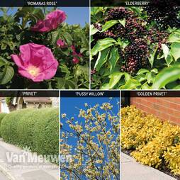 Fast Growing Hedging Collection
