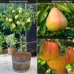 Mini Apple and Pear Tree Collection