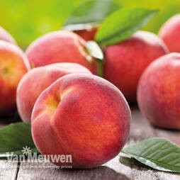 Fruit Me® 'Peach Me Red'