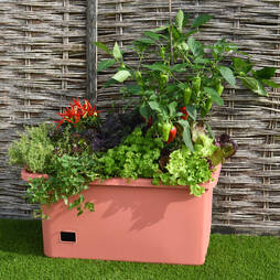 Garden Grow Self Watering Mobile Vegetable Trug