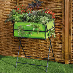 Lime Grow Trug Tuscan Planter + '10 Free Seed