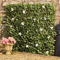 White Flower Hedge Trellis 1x2M