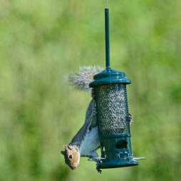 Brome Squirrel Buster Seed Feeder