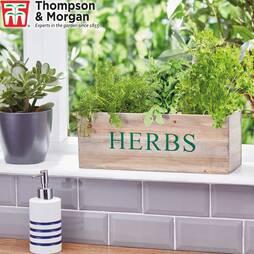 Wooden Herb Gift Set