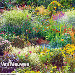 Seasonal Border Perennial Plants 'Lucky Dip'