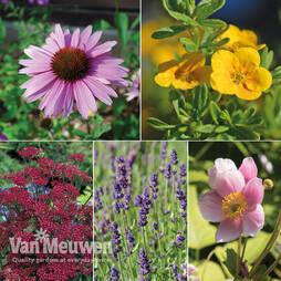 Perennial Lucky Dip Collection